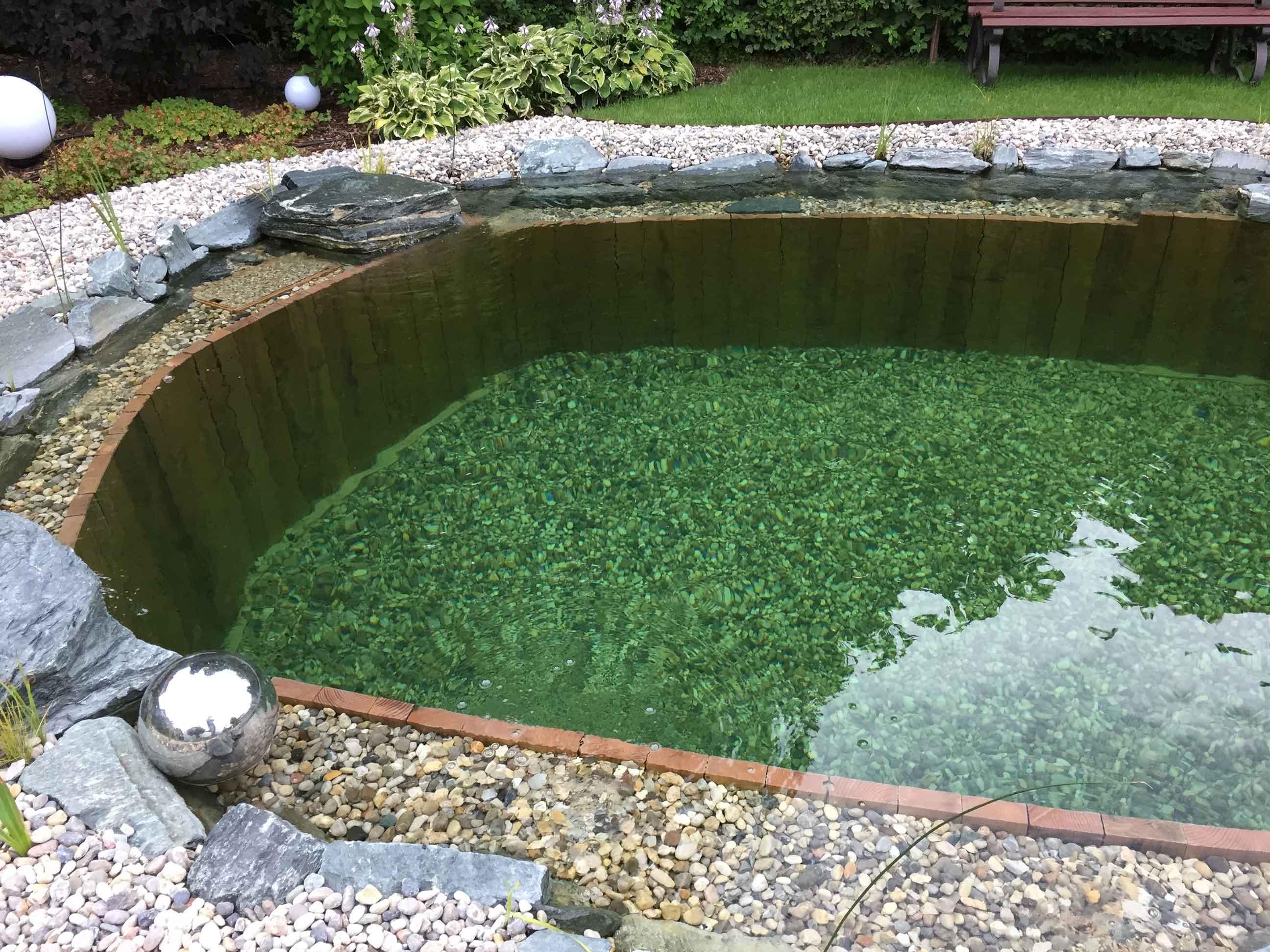 Biopool Naturpool Schwimmteich